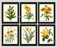 Unframed Botanical Print Set of 6 Antique Yellow Flowers Wall Art Illustration