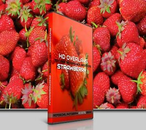 200 STRAWBERRY FRUIT DIGITAL PHOTOSHOP OVERLAYS BACKDROPS BACKGROUND PHOTOGRAPHY