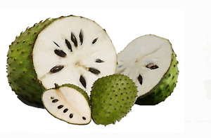 Tropical Fruit SOURSOP TREE Guanábana