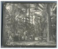 Tunisie, Groupe récoltant les dattes  Vintage silver print.  Tirage argentique