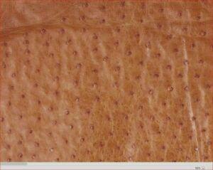 Ostrich Leather Hide Cognac (maddog ) color  (%100 Natural Genuine Hide)
