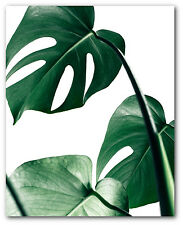 Monstera Leaf Print, Tropical Monstera Leaf, Palm Art, 8 x 10 inches, Unframed