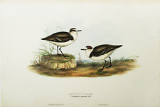 John Gould ORIGINAL Hand Colored Lithograph, Birds of Europe