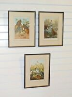 Set of 3 Framed Antique Bird Chromolithographs