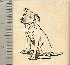 American Pit Bull Terrier Dog Rubber Stamp H10316 Wm