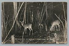 """Flash Light of Deer"" RPPC Antique Wisconsin Photo—Stierle—Madison WI 1911"