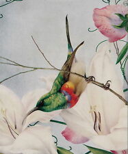 Vintage Maurice & Edward Detmold Art Print Wildlife Bird Sugarbird Hummingbird
