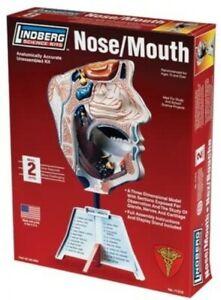 Lindberg Science Kits #71310  NOSE/MOUTH    3-D plastic model kit    NIB