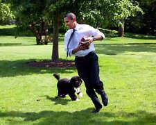 BARACK OBAMA PLAYS BALL WITH FIRST DOG BO 8X10 PHOTO