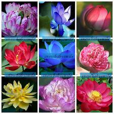 9 KIND 90+SEEDS Lotus Seeds Water Lily Pad Nymphaea Nelumbo Nucifera Pond Plants