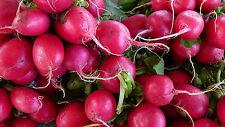 Radieschen 500 Samen - Rettich - Salat - Gemüse  ANGEBOT