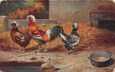 B28510 animal coq cocks painting