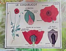 Ancienne Carte expo affiche scolaire set de table le Coquelicot Pavot Pétale
