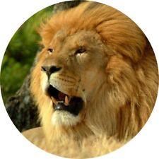 4x4 Spare Wheel Cover 4 x 4 Camper Graphic Vinyl Sticker Wild Cats Lion WC5