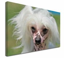"Chinese Crested Dog 30""x20"" Wall Art Canvas, Extra Large Picture , AD-CHC4-C3020"