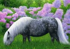 Shetland pony horse azalea flower garden landscape limited edition aceo print