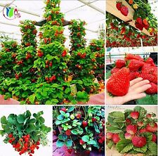 100pcs Red Giant Climbing Strawberry Fruit Plant Seeds