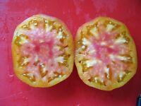 50+ Samen FEIN und WINTERHART! Grünkohl Pink Kale