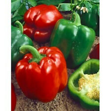 """Keystone Giant Pepper *Heirloom* (50 Seed's) """"FREE SHIPPING"""" <Non-GMO>"""