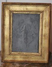 Fossile de reptile KEICHOUSAURUS sur plaque d'ardoise