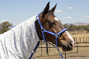 Capriole Equestrian Royal & Sky Blue Halter Lead Rope Set - Horse Rug Accessory