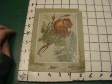 vintage print -- 1800's -  ROSE and winter scene, some damage -- EMBOSSED