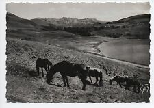 Cpa carte postale 63 Puy de Dome L'Auvergne le Mont Dore le cheval