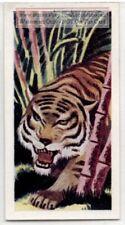Tiger Felis tigris Large Cat Wild Feline Vintage Ad Trade Card