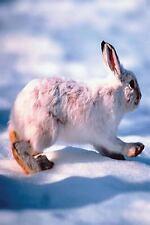 Seasonal Winter Wildlife Photo Journals Notebooks Diaries: Journal White Hare.