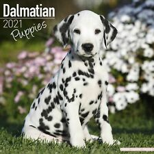 Dalmatian Puppies Calendar 2021 Premium Dog Breed Calendars