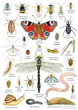 More details for british wildlife nature identification postcard chart a5 birds trees insects