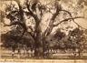 Martinique, Fort de France, Sablier de la Savane Vintage albumen print.  Tirag