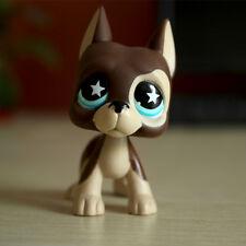 Littlest Pet Shop Great Dane Dog LPS #817 Brown Cream Blue Star Eyes Rare Puppy