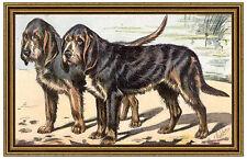L Otterhound ou Chien rooriginal Hunting Pack Dog Mahler 49 Framed