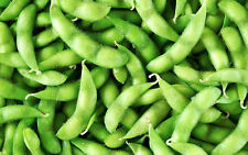 SOY BEAN 150+ seeds BULK PACK sprout vegetable garden edamame EDIBLE legume bean