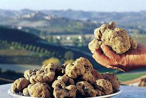 WHITE Truffle truffel Choiromyces venosus seeds Mushroom Mycelium Spores 15 ml