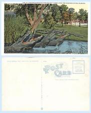 New listing Alligator Quartette Singing Suwanee River Florida Reptile Teich Postcard