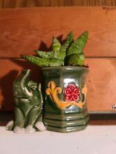 Sanserviera Starfish Boncellensis in Lucky Elephant Pot ~Succulent Snake Plant