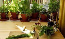 kit + de 500 Graines de plantes aromatiques Non traité seeds légumes potager