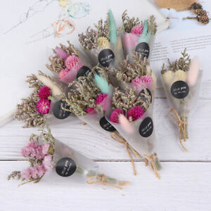 Small Natural Dried Flower Mini Dry Flowers Wedding Supplies Photography Props