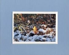 """ Golden Leaf""  photo by Maureen McCarthy 8"" x 10"" mat, 4"" x 6"" image"