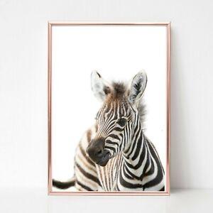baby zebra Print picture UNFRAMED print nursery wall art a4 safari animal