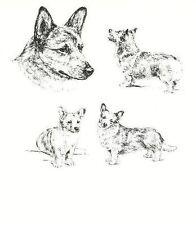 Welsh Corgi - 1963 Vintage Dog Print - Matted *