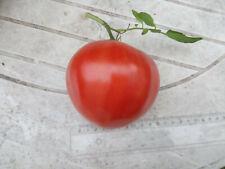 30 graines semences tomate ancienne COEUR DE BOEUF seeds bio