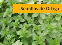 300 semillas frescas de Urtica Dioica ORTIGA Medicinal