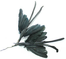 NOS vintage 1920 millinery hat feather bird trims by 2 4653 black