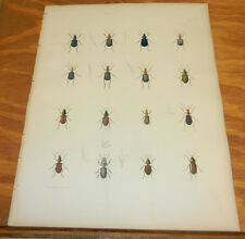 1854 COLOR Insect Print/KETTLE BUG, SHORT WING BEETLE, LARK BUG, STONE BEETLE