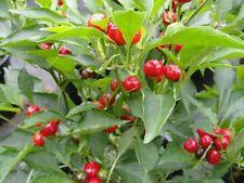 20 organic 2016 CHILI PEPPER RED CHERRY - HOT PEPPER  / Finger Hots