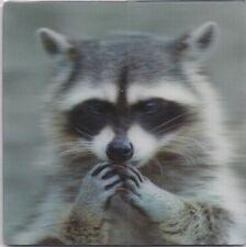 xxl - 3 -D - Magnet:niedlicher Waschbär - racoon