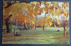 1959 POSTCARD OF CARTER MEMORIAL WAYSIDE PARK BETWEEN WYTHEVILLE & PULASKI VA